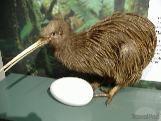 The Amazing World Of Kiwi Birds Sam S Amazing Animals